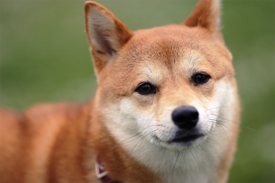 【犬】ただひたすらに犬が好きと連呼してみる