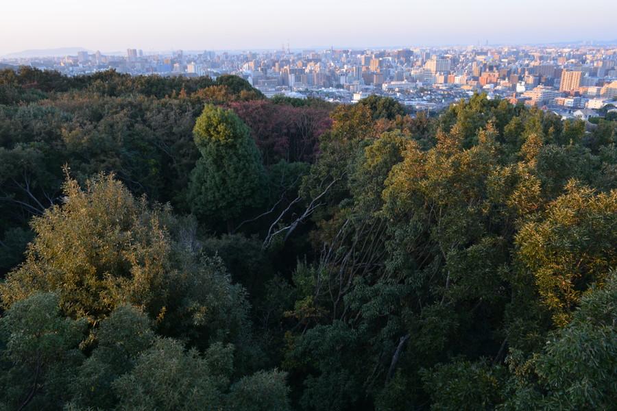 この木が無かったらもっと見晴らし良いのになぁと思いつつも、緑は大事だと考え直す。