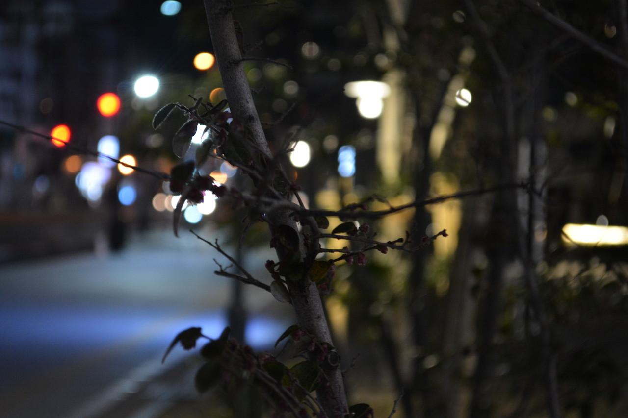 六本松:街路樹の魅力