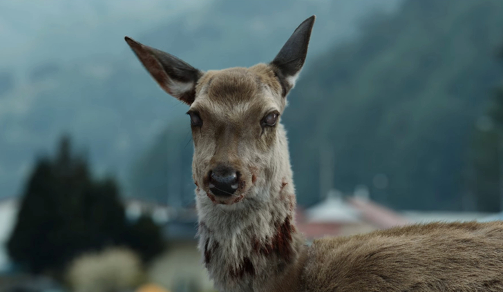 感染した鹿
